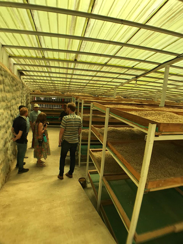 coffee-tours-hacienda-primavera-galletti-16